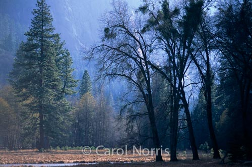 America-California-Yosemite-trees-waterfall