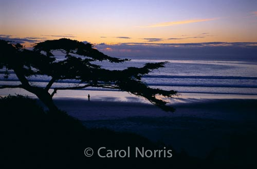 America-Carmel-California-Cyprus-tree-lone-figure-ocean-sunset
