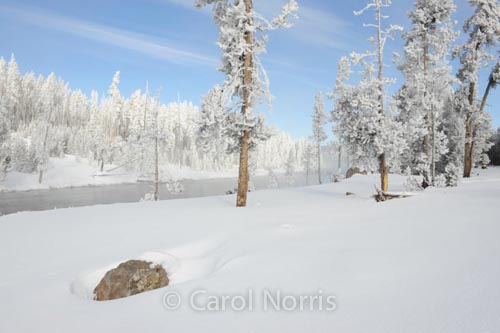 America-yellowstone-national-park-winter-hawfrost-snow-montana