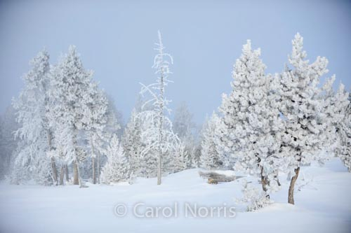 America-yellowstone-national-park-winter-hawfrost-trees-snow-montana-3