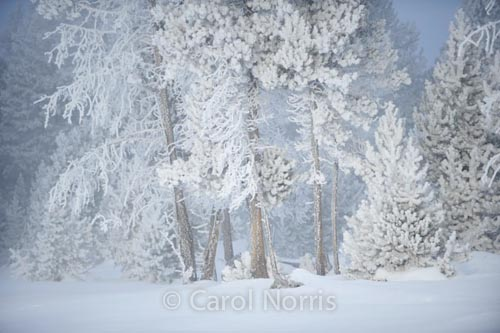 America-yellowstone-national-park-winter-hawfrost-trees-snow-montana