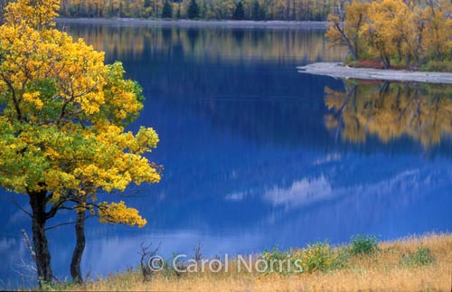 Americana-glacier-national-park-golden-trees-fall-lake-montana
