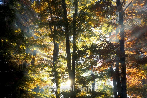 Canada-Ontario-Fall-colours-sunburst