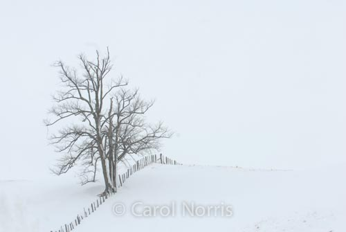 Canada-Ontario-solitude-tree-snow-fence-skeleton