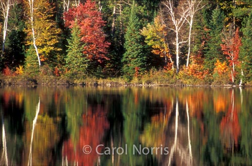 Canada-fall-reflection-trees-lake