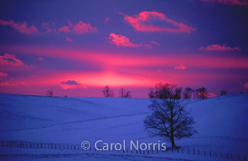 Canada-ontario-huron-county-winter-sunset-pink-sky-tree-snow