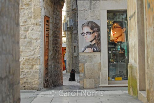 European-Croatia-Split-black-dog-glasses-store