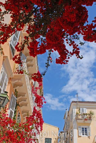 European-Greece-Corfu-bougainvillea-blue-sky