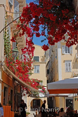 European-Greece-Corfu-restaurant-bougainvillea