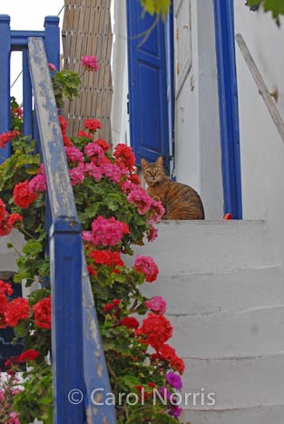 European-Greece-Greek-island-Mykonos-blue-paintwork-cat-steps