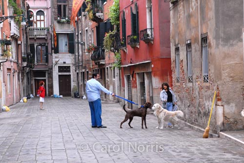 European-Italy-Venice-dogs-golden-retriever-couple-romance-amore