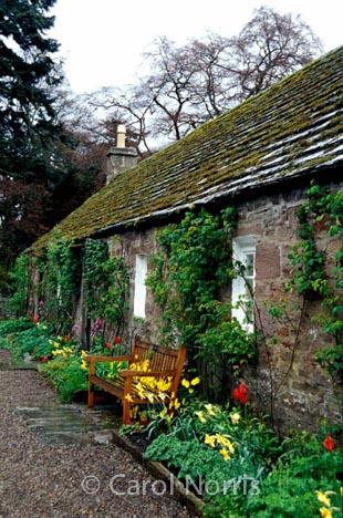 European-Scotland-Britain-stone-cottage-spring-flowers