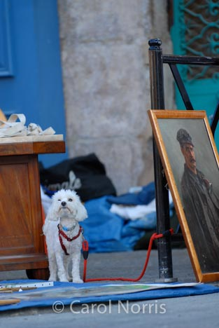 France-Provence-white-poodle-artwork