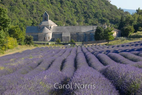 Provence-France-Abbaye-de-Senanque-Gordes-lavender-Abbey