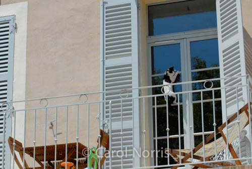 Provence-France-balcony-black-white-cat