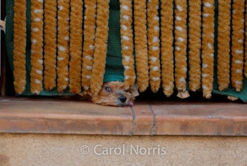 Provence-France-dog-under-door