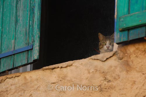Provence-France-green-shutters-cat