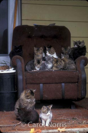 barn-cats-chair-Ontario