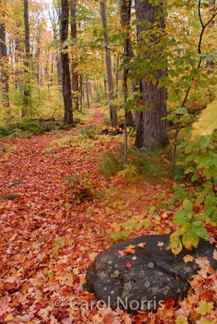 trees-leaves-fall-forest