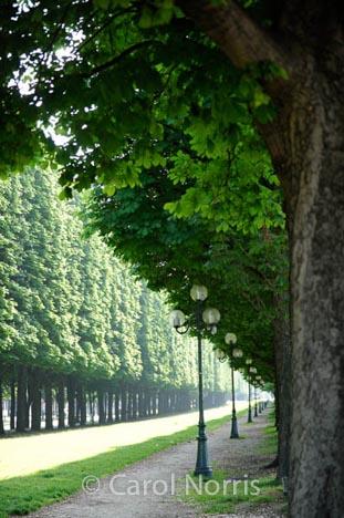 champs-elysees-paris-trees-lamps