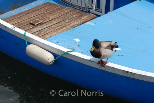 taking-plunge-boat-duck-lake-garda-italy