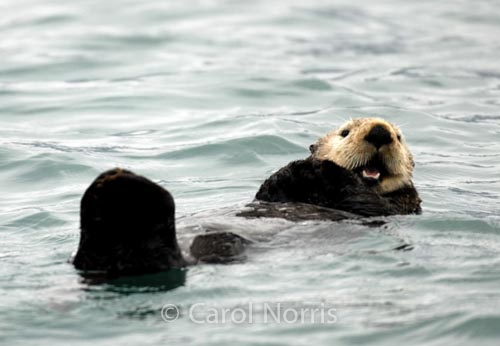 The Happy Otter