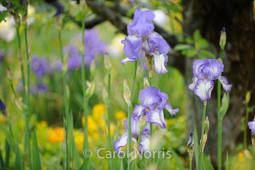 In Monet'€™s Garden II