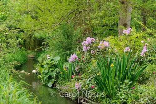 In Monet'€™s Garden III