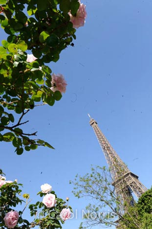 Eifel Tower in Spring