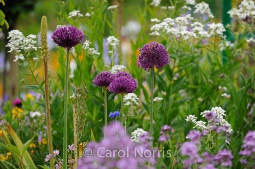 In Monet'€™s Garden