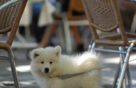 Provence-France-white-puppy-restaurant.jpg