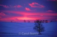Canada-ontario-huron-county-winter-sunset-pink-sky-tree-snow.jpg