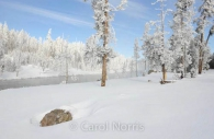 Americana-Yellowstone-National-Park-haw-frost-winter-snow.jpg