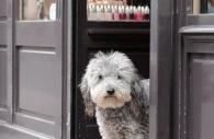 dog-tramp-paris.jpg