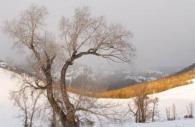 America-Yellowstone-national-park-winter-tree-snow.jpg