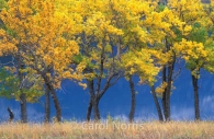 America-Montana-Glacier-National-Park-fall-golden-trees.jpg