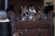 barn-cats-chair-Ontario.jpg