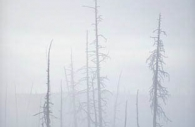 America-yellowstone-national-park-hot-springs-winter-dead-trees-mist-steam.jpg
