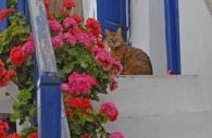 European-Greece-Greek-island-Mykonos-blue-paintwork-cat-steps.jpg