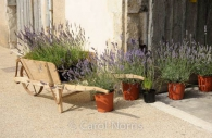 Provence-France-wheelbarrow-lavender-pots.jpg