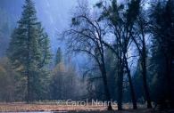 America-California-Yosemite-trees-waterfall.jpg