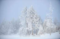 America-yellowstone-national-park-winter-hawfrost-trees-snow-montana-2.jpg