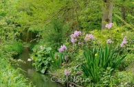 monet-garden-giverny-pairs-stream.jpg