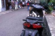 European-Italy-Positino-motorbike-black-white-cat-asleep-passenger.jpg