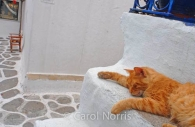 European-Greece-Mykonos-Greek-island-ginger-cat-white-steps-sleeping.jpg