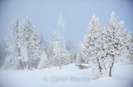Americana-Yellowstone-National-Park-haw-frost-winter-trees-3.jpg