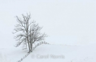Canada-Ontario-solitude-tree-snow-fence-skeleton.jpg