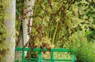 bridge-blossom-monet-garden-giverny-paris.jpg