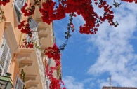 European-Greece-Corfu-bougainvillea-blue-sky.jpg