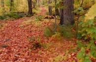 Canada-ontario-algonquin-park-leaves-fall-path-trail.jpg